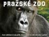 Gorilí rodina pražské ZOO